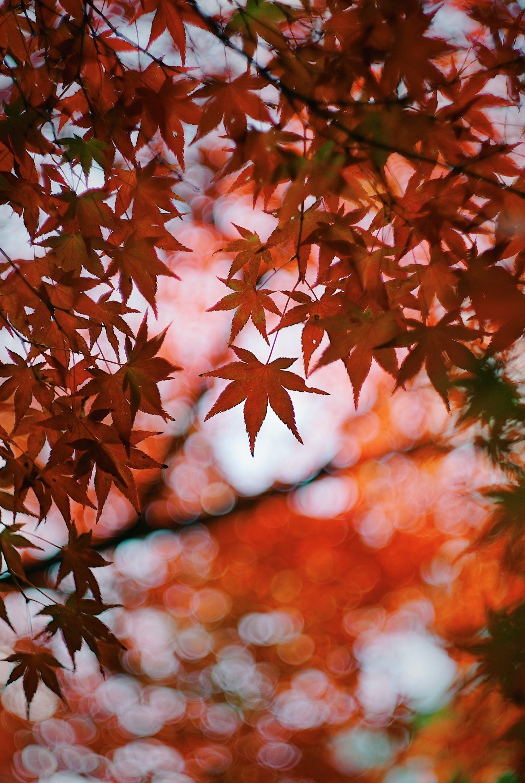 東行庵の紅葉
